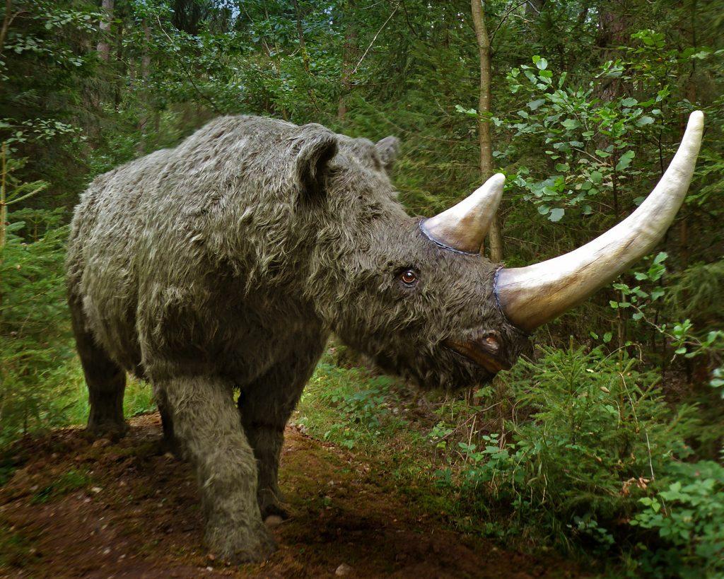 Ser humano extinción mamíferos